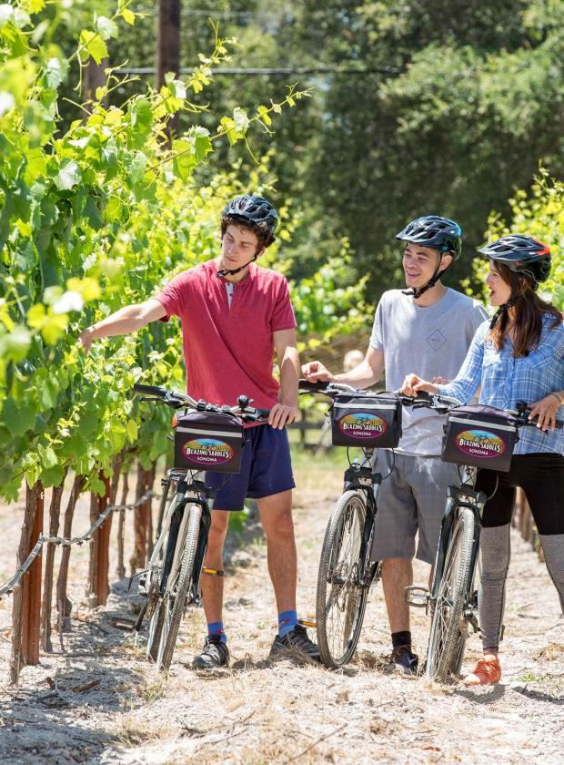 Wine Country Guided Tour In Sonoma Blazing Saddles